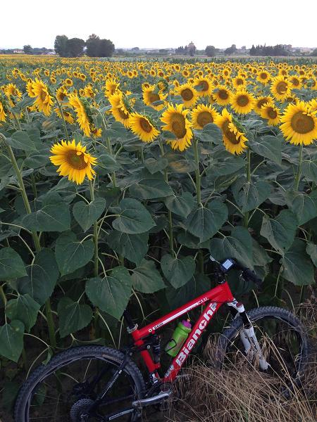 lago-trasimeno-in-bici-avventura-per-la-famiglia